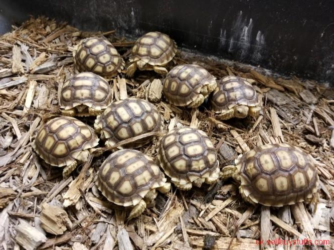 second hand/new: Tortoises and Turtles